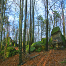 Bukowa Góra Reserve