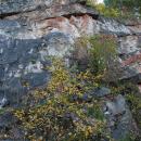 Szewce Quarry